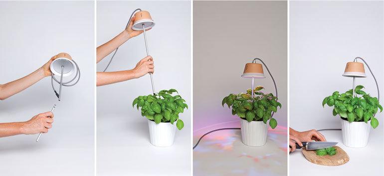plantes sans lumi re ext rieure archives caroline munoz. Black Bedroom Furniture Sets. Home Design Ideas
