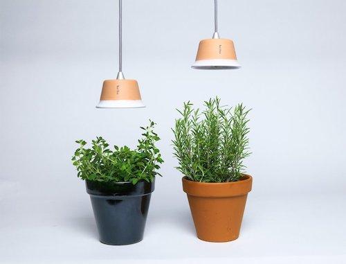 Plantes sans lumi re ext rieure archives caroline munoz - Plante interieur sans lumiere ...