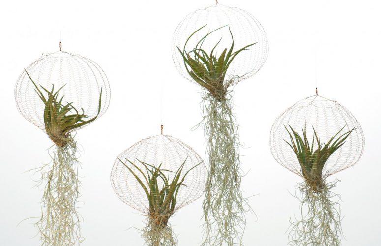 air-planting-carolijn-slottje-11-e1444989646469-1240x775